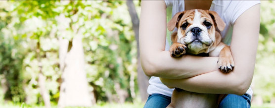 Choosing A Puppy! – Pets Are Not Just For Today But At Least A Decade And A Half
